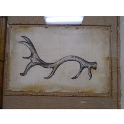Antler Hand Painted Study